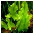 Аквариумные растения - каталог аквариумных растений