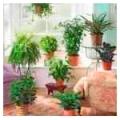 Каталог комнатных растений, свойства, уход, фото, характеристики