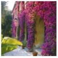 Вьющиеся растения - каталог вьющихся и лазящих растений - свойства, посадка, фото, характеристики